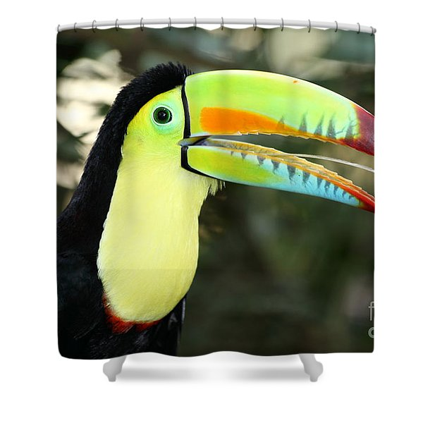 Keel Billed Toucan Shower Curtain