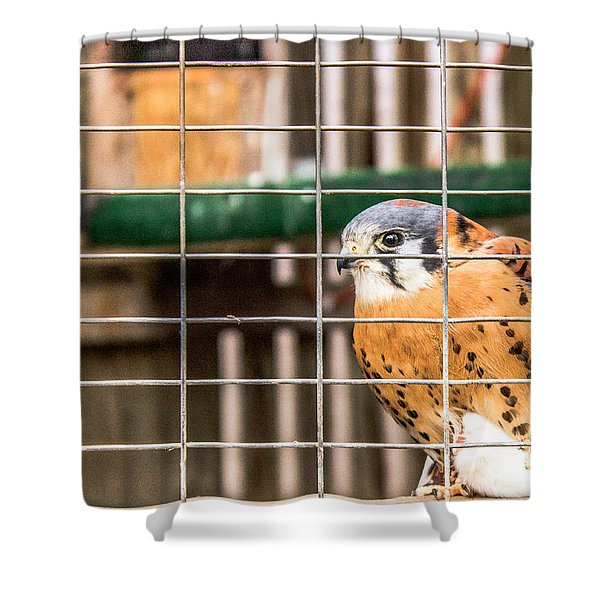 Kestrel And A Headless Mouse Shower Curtain
