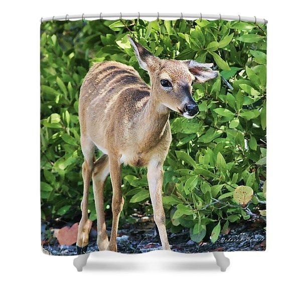 Key Deer Cuteness Shower Curtain