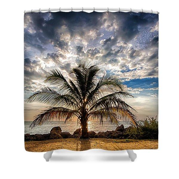 Key West Florida Lone Palm Tree  Shower Curtain