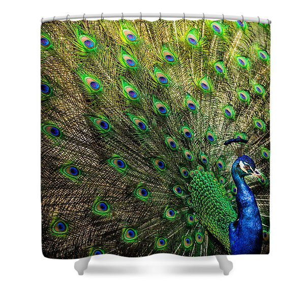King Of Birds Shower Curtain