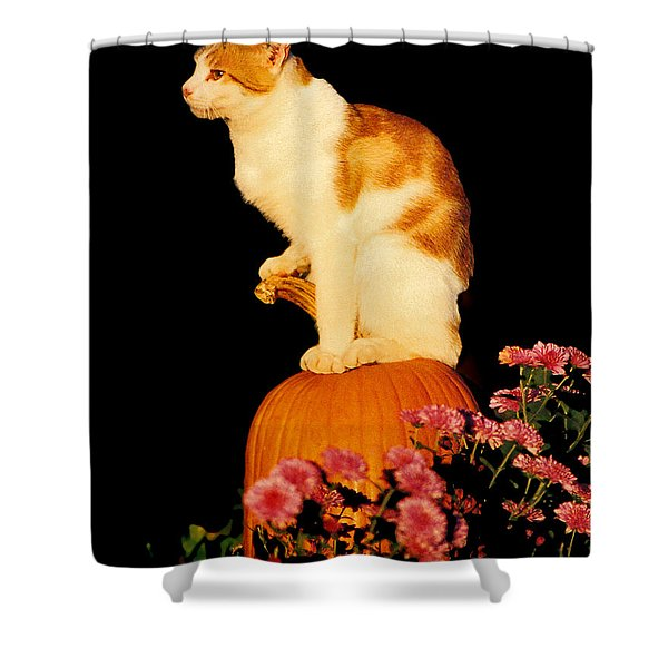 King Of The Pumpkin Shower Curtain