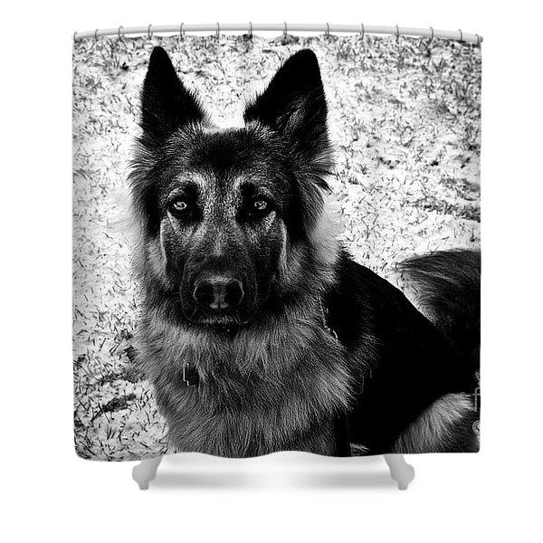 King Shepherd Dog - Monochrome  Shower Curtain