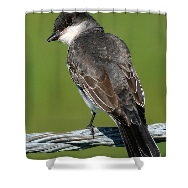 Kingbird On A Wire Shower Curtain