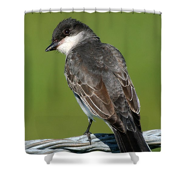 Shower Curtain featuring the photograph Kingbird On A Wire by William Selander