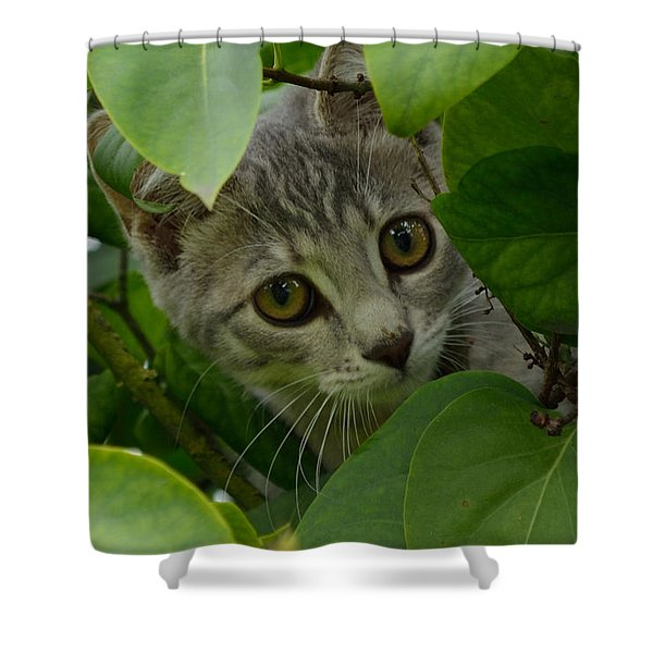 Shower Curtain featuring the photograph Kitten In The Bushes by Scott Lyons