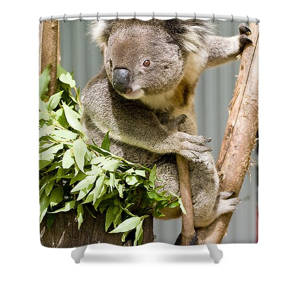 Koala Shower Curtain