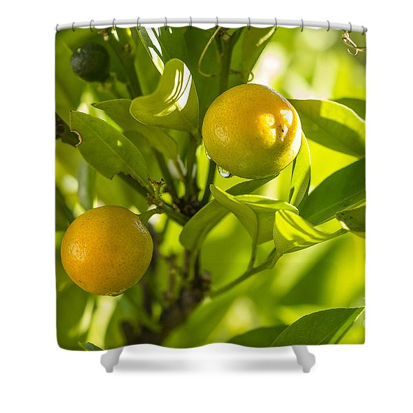 Kumquats Shower Curtain