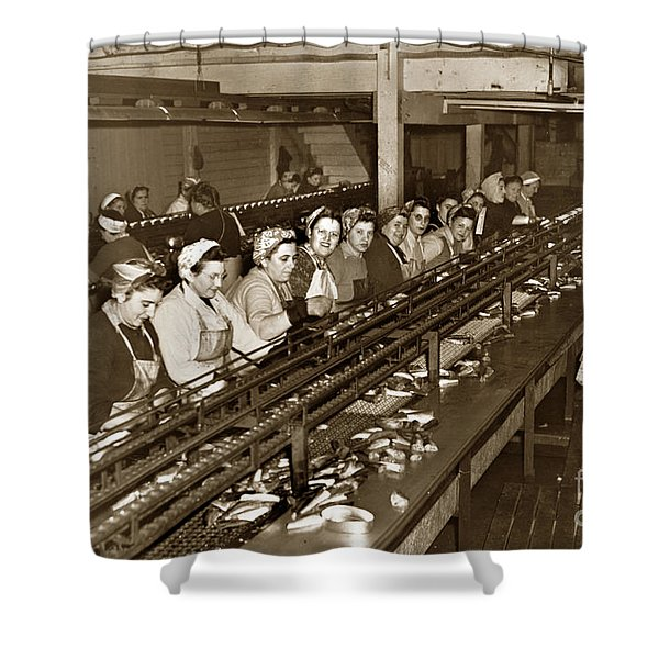 Ladies Packing Sardines In One Pound Oval Cans In One Of The Over 20 Cannery's Circa 1948 Shower Curtain
