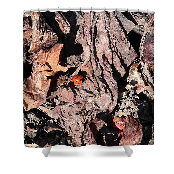 Lady Bug In Spring Shower Curtain