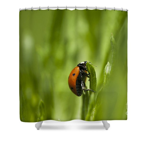 Lady Bug Shower Curtain