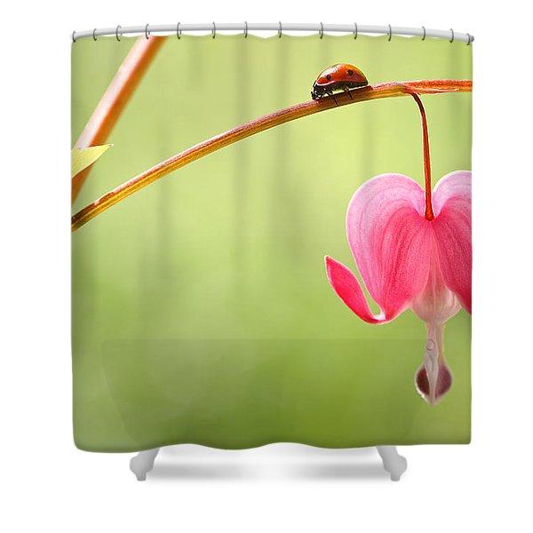 Ladybug And Bleeding Heart Flower Shower Curtain