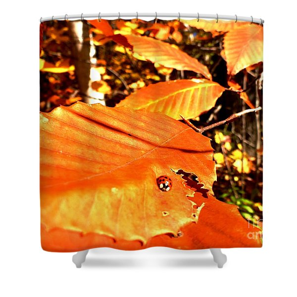 Ladybug At Fall Shower Curtain
