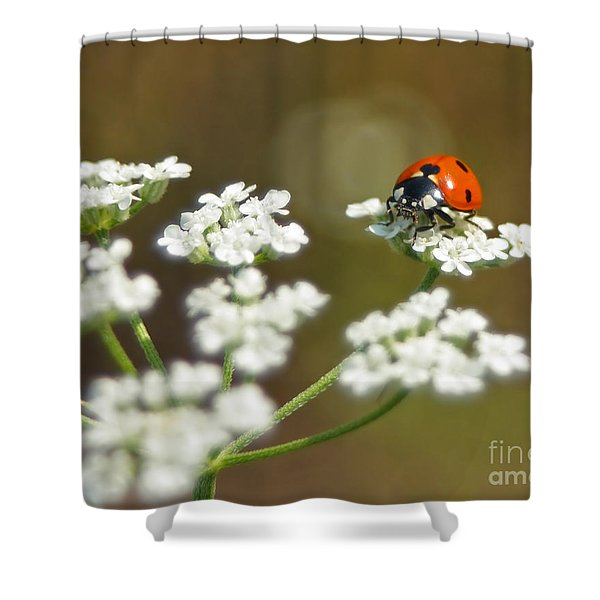 Ladybug In White Shower Curtain