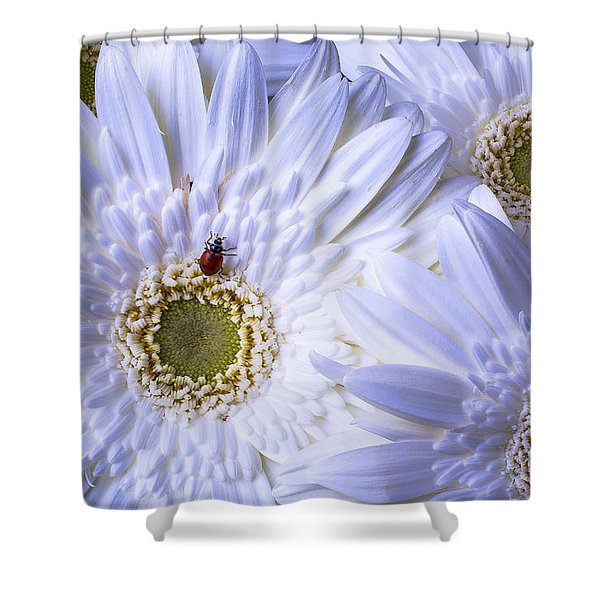Ladybug On White Daisy Shower Curtain