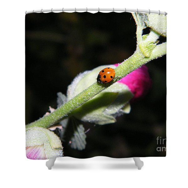Ladybug Taking An Evening Stroll Shower Curtain