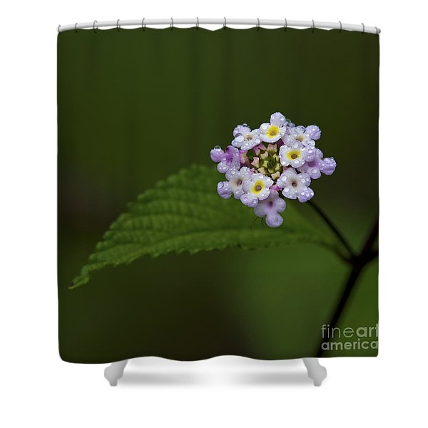 Lantana Ballet.. Shower Curtain