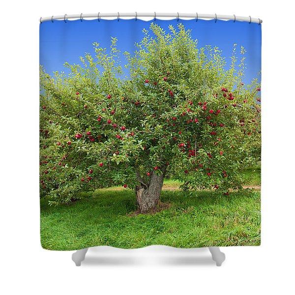 Large Apple Tree Shower Curtain