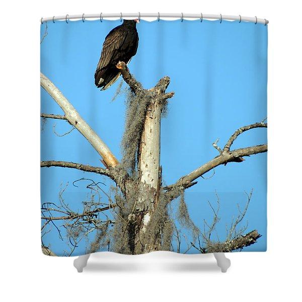 Larry Buzzard Vulture Shower Curtain