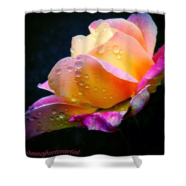 Last Lady Diana Rose Of 2014 Shower Curtain