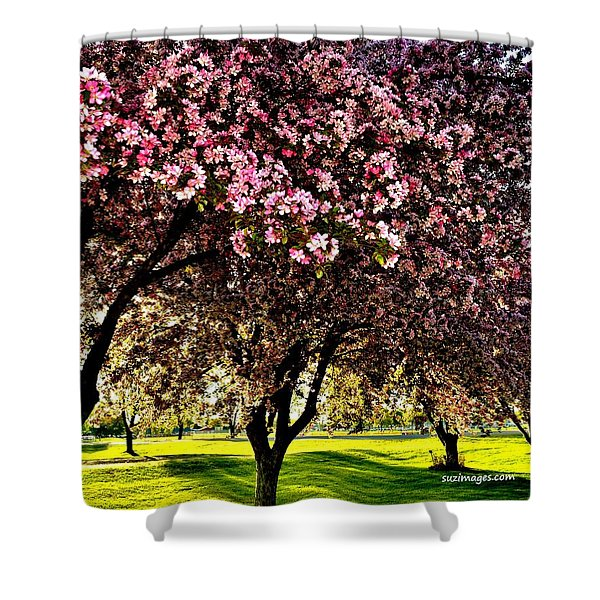 Late Afternoon At Lake Park Shower Curtain