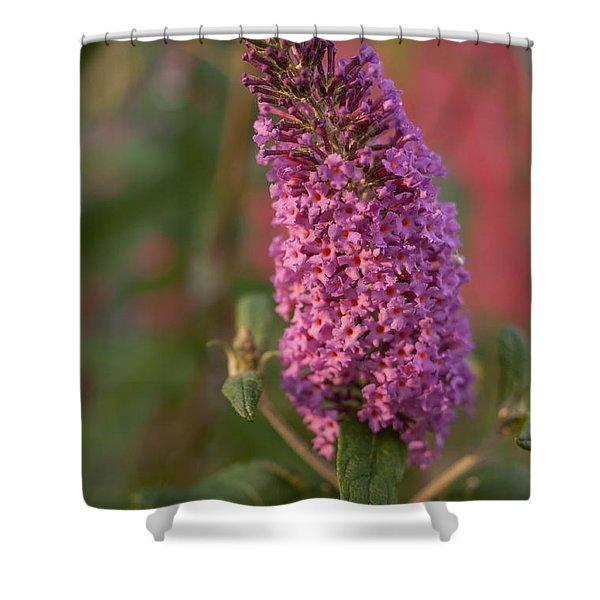 Late Summer Wildflowers Shower Curtain
