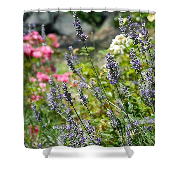 Lavender In Bloom Shower Curtain
