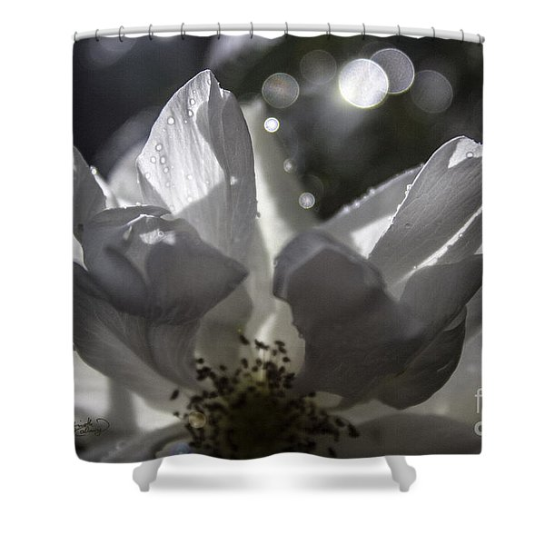 Lazy Afternoon White Rose Shower Curtain