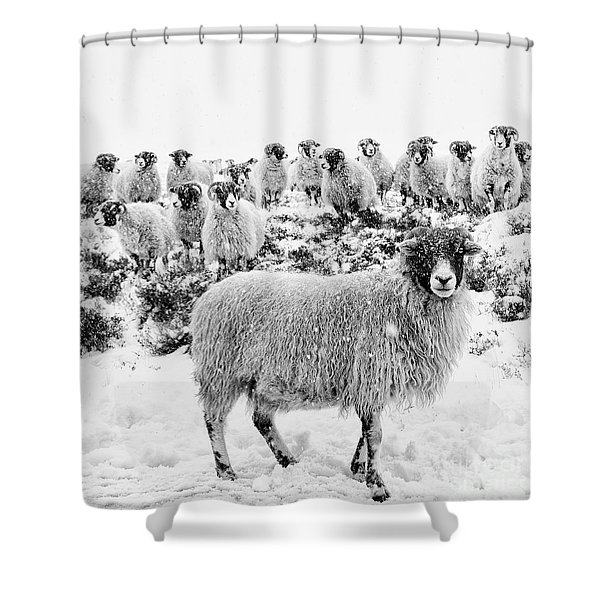 Leader Of The Flock Shower Curtain