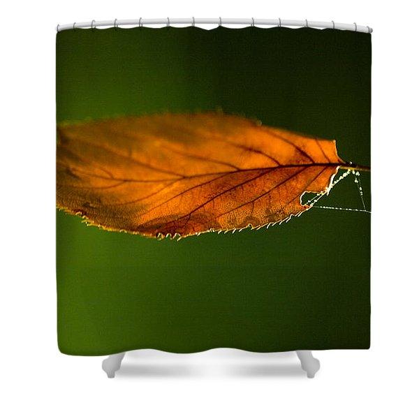 Leaf On Spiderwebstring Shower Curtain
