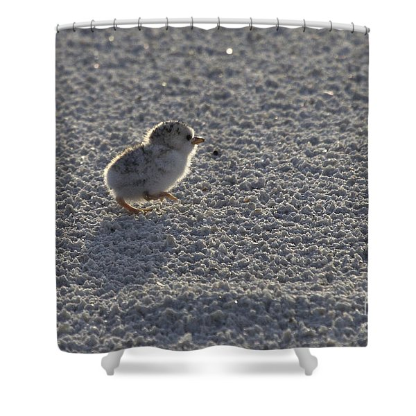 Least Tern Chick Shower Curtain