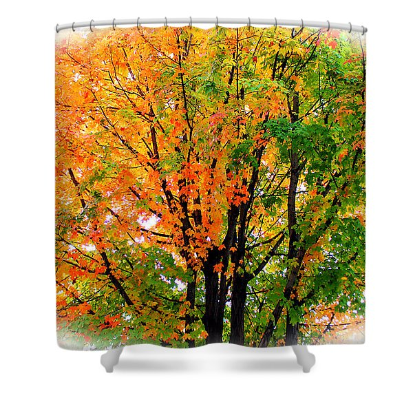Leaves Changing Colors Shower Curtain