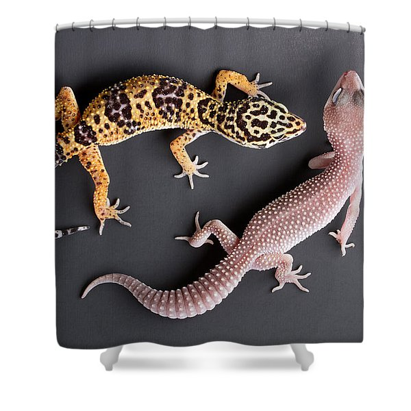 Leopard Gecko E. Macularius Collection Shower Curtain