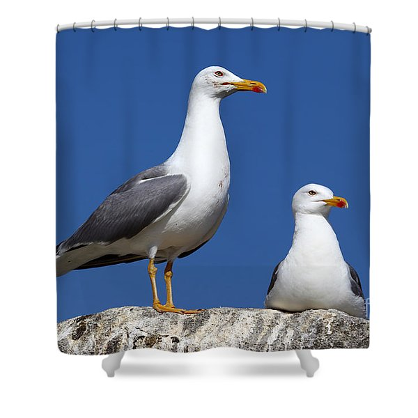 Lesser Black-backed Gulls Shower Curtain