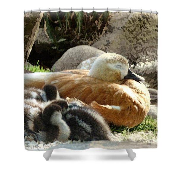 Let Sleeping Ducks Lie Shower Curtain