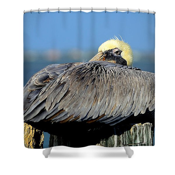 Let Sleeping Pelicans Lie Shower Curtain
