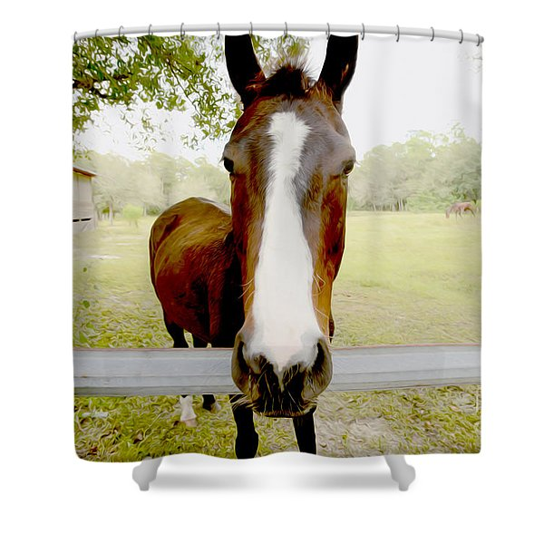 Let's Go For A Ride Shower Curtain