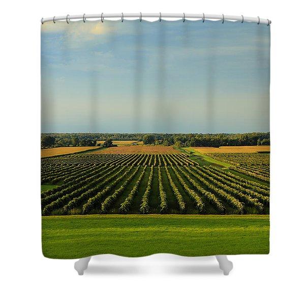Lewiston Summer Vineyards Shower Curtain