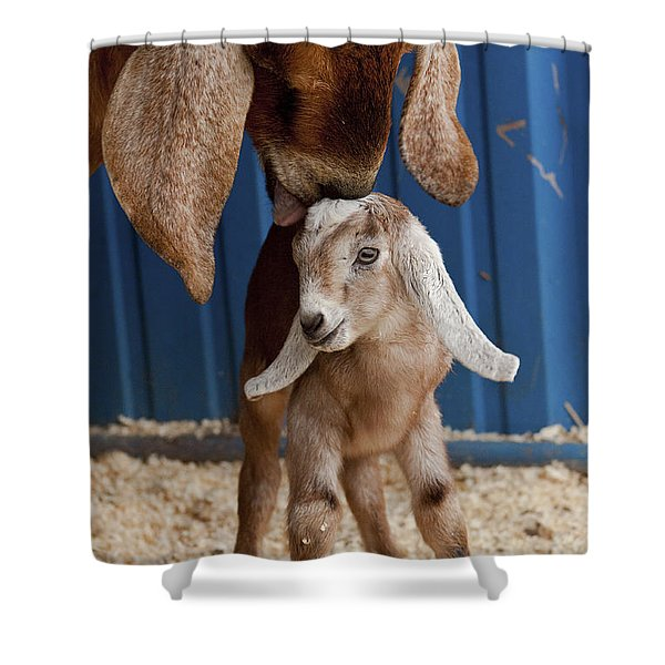 Licked Clean Shower Curtain