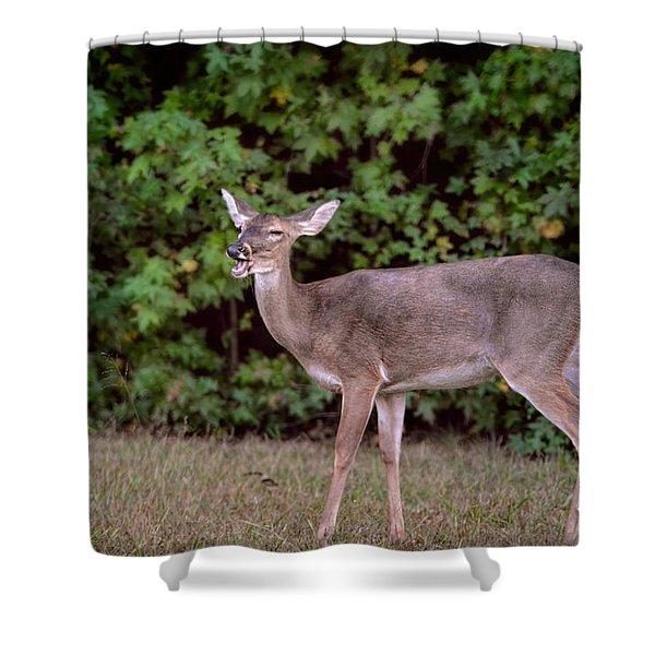 Lighten Up - The Laughing Deer Shower Curtain