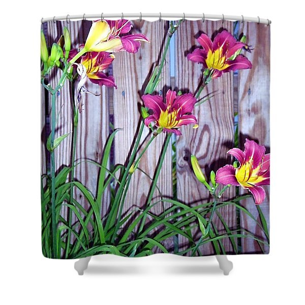 Lilies Against The Wooden Fence Shower Curtain