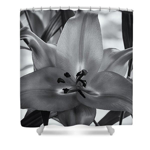 Lily 16 Shower Curtain