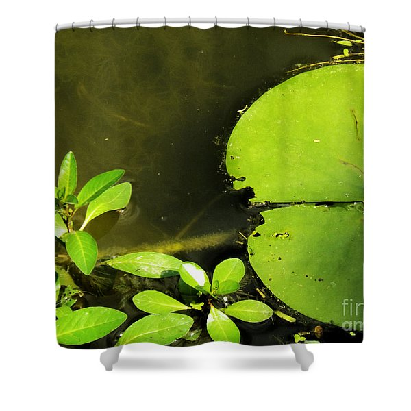Lily Pad Shower Curtain