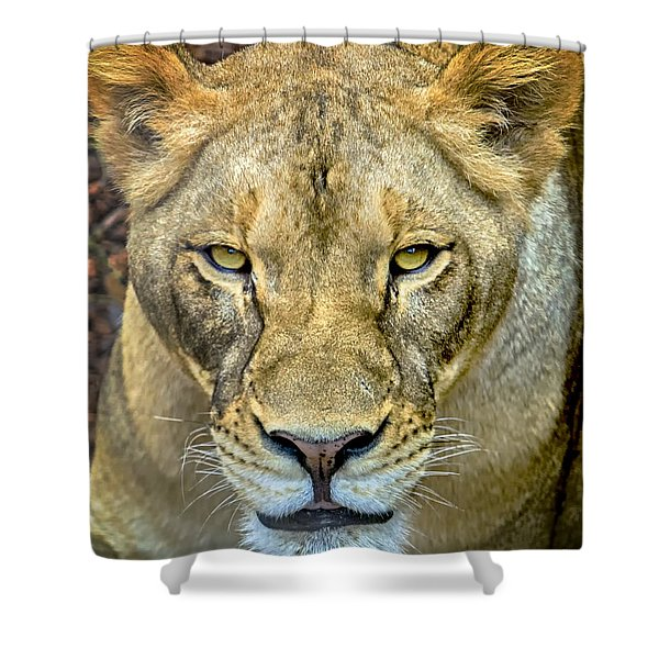 Shower Curtain featuring the photograph Lion Closeup by David Millenheft