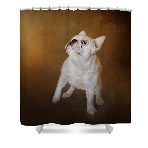 Little Beggar - White French Bulldog Shower Curtain