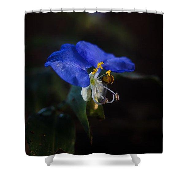Little Blue Shower Curtain