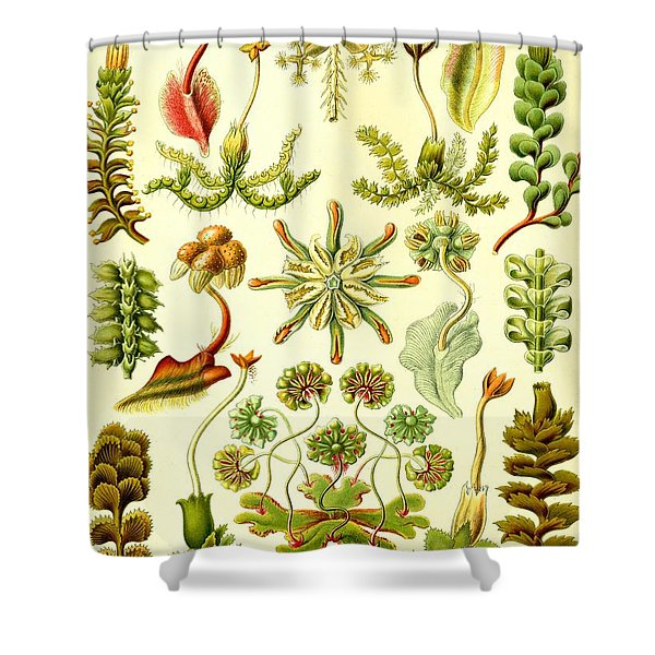 Liverworts Moss Brunnenlebermoos Haeckel Hepaticae Shower Curtain