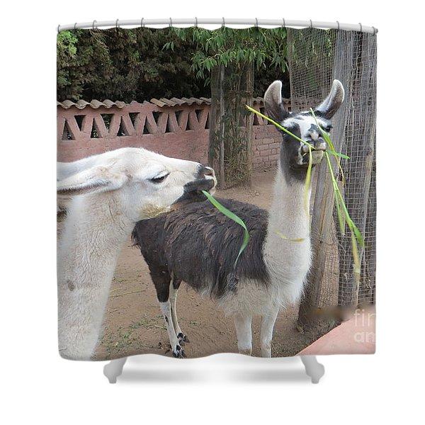 Llamas In Peru Shower Curtain