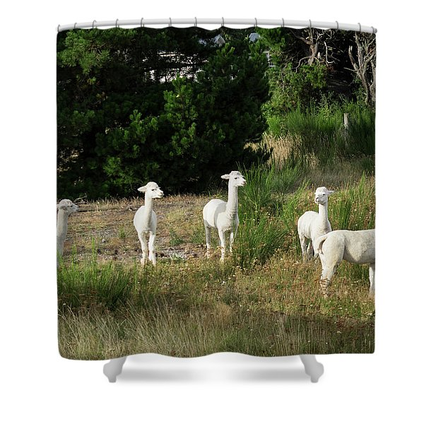 Llamas Standing In A Forest Shower Curtain