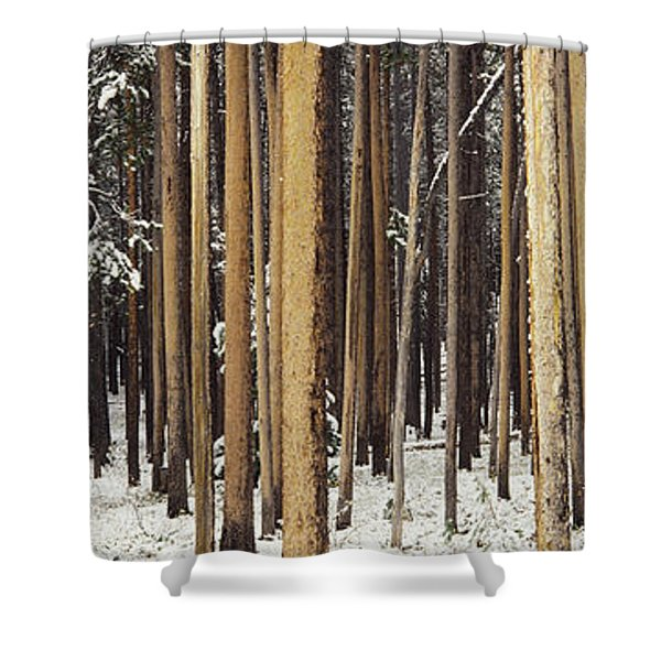 Lodgepole Pines And Snow Grand Teton Shower Curtain